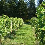 Vineyards are part of the 80 acres of land and trails