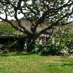 Foto de Diamond Head Bed And Breakfast