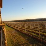  Sunset at Ventosa Vineyards