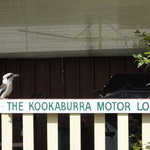 Φωτογραφία: Kookaburra Motor Lodge