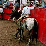 Rancho Las Cascadas Riding Tours Foto