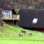 Visitors to the lodges