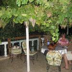 the terrace, with grape vines