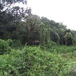 Chilapata Wildlife Sanctuary