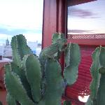 Cameleon on the rooftop terrace