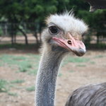 Aruba Ostrich Farm