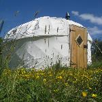 'Meadow' Yurt in the spring