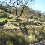 ‪National Zoological Gardens of South Africa‬