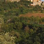  View up to Orvieto from Villa Acquafredda