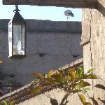 Stork nesting on Palace wall across from our room