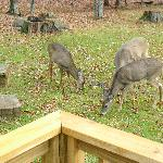  deer outside the cabin