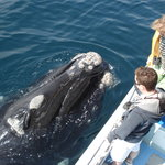 Whale watching boat trips at Hermanus