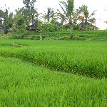 Foto van Sawah Sunrise Bed & Breakfast