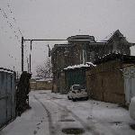White Tashkent in the Dec winter