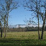 Premier RV Resort Eugene - View of field next to RV park