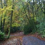 The road outside of Brambleside in Autum n