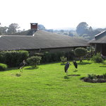 Photo de Ngorongoro Rhino Lodge