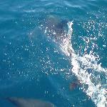 Dolphin trip off the Marina