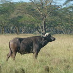 Nakuru Day Tours