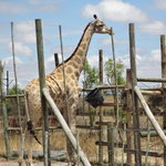 Giraffe House Wildlife Awareness Centre