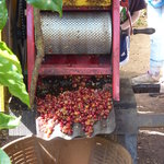 Santa Elena Cooperative Coffee Tours