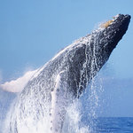 Ocean Friendly Whale Watching Tours