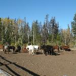 Photo of Red Willow Guest Ranch