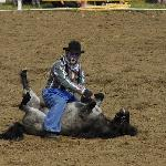 Der Clown beim Rodeo