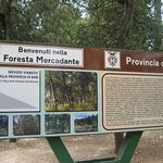 Foresta di Mercadante