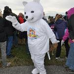 the manager of the hostel is BRR the bear at the Annual Polar Bear Swim