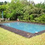 The gorgeous pool