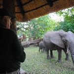 elephants joined us for breakfast at the lodge reception