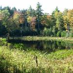 Beaver Pond, a minute's walk from the B&B
