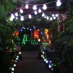 Christmas lights in the garden