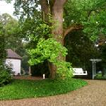 Our century old tulip tree greets visitors to Rabbit Run