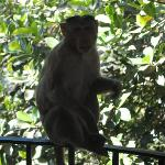 The monkey that attacked us. I didnt catch his name.