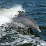 Outer Banks Cruises