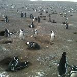 Don't miss visiting the penguins on Isla Magdalen!