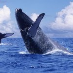Whale Watching Photo Safari by Vallarta Adventures