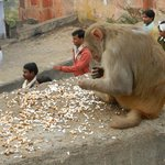 Monkey Temple (Galwar Bagh)