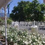  The verandah over looking the road-what impressive roses!