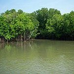 Pichavaram Mangrove Forest