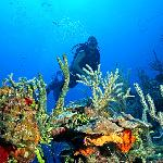 Diving our beautiful reef!