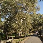 Linear Park walking & cycling trail