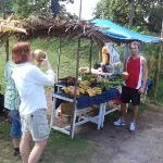 Produce stand run by Native Carib Indians.