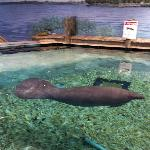 South Florida Museum, Bishop Planetarium & Parker Manatee Aquarium Foto