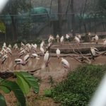 Mahendra Chaudhary Zoological Park