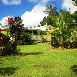Foto di Coconut Cottage Bed & Breakfast