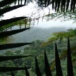 Views of the cloud forest!