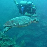 Dive master and sea turtle